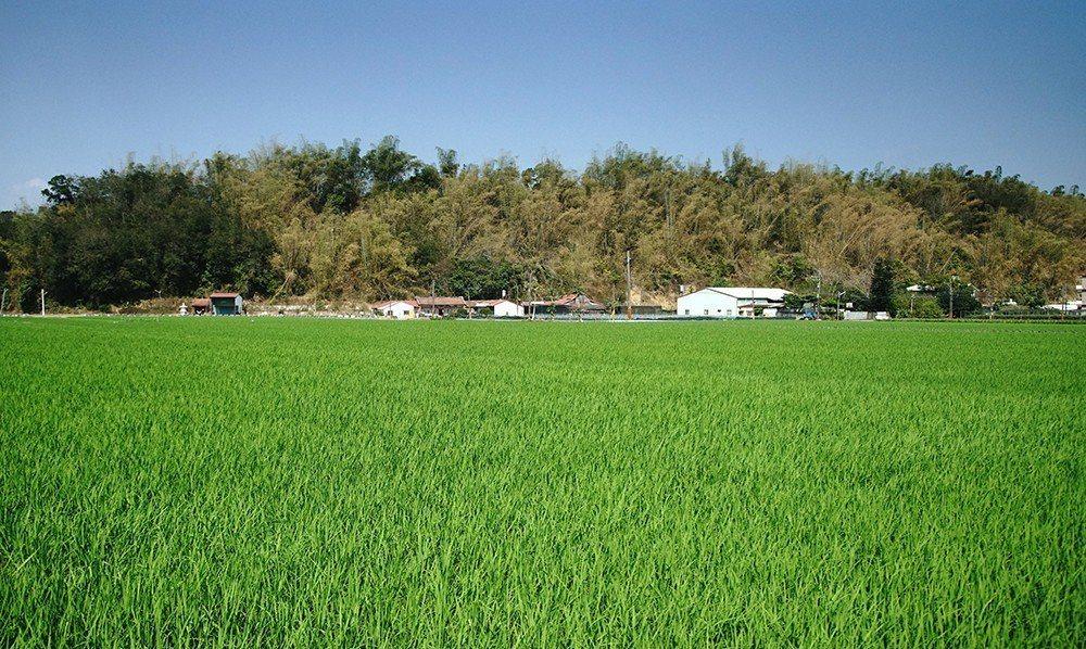 稻田、三合院就是美濃農村最迷人的生活印象。 (攝影/曾信耀)