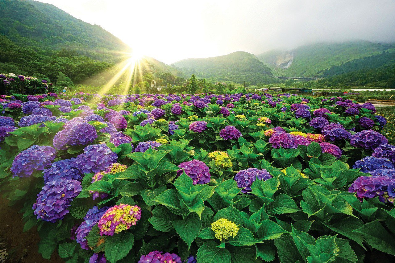 Flower Viewing in Taipei
