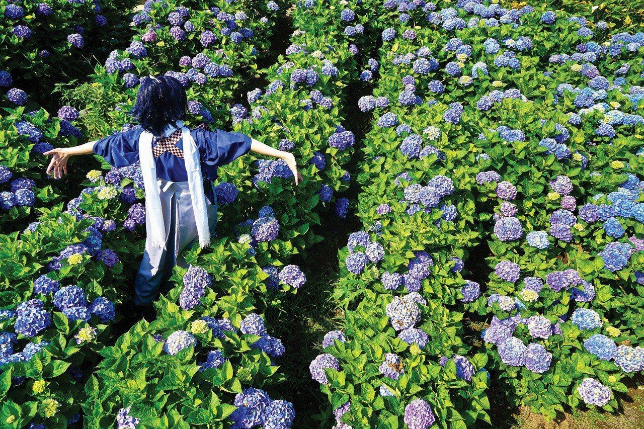 Hydrangea Fields