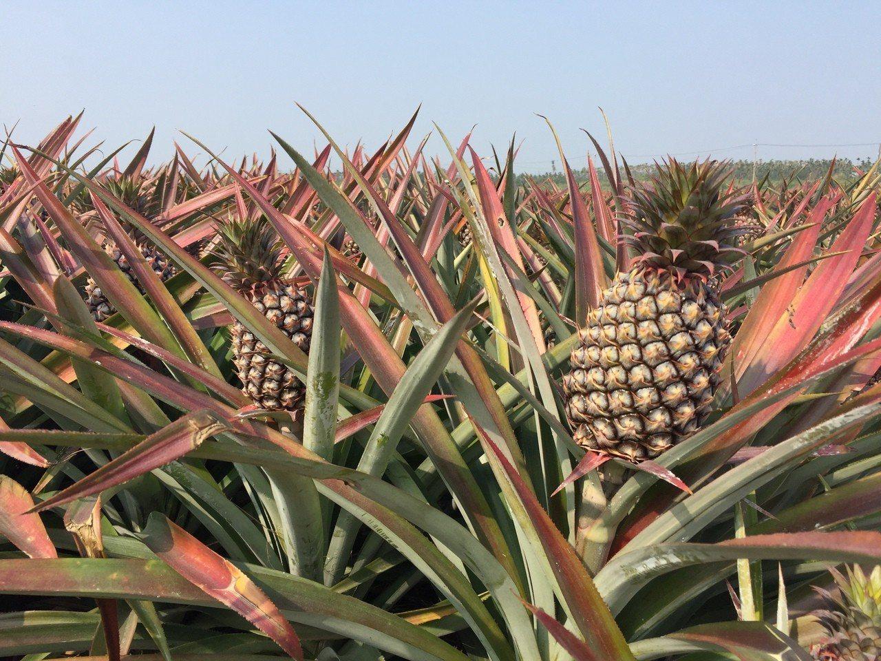 南投縣農產品明將隨著縣長出訪大陸,希望能打開農產品及農產加工品的登陸口岸。記者黑...