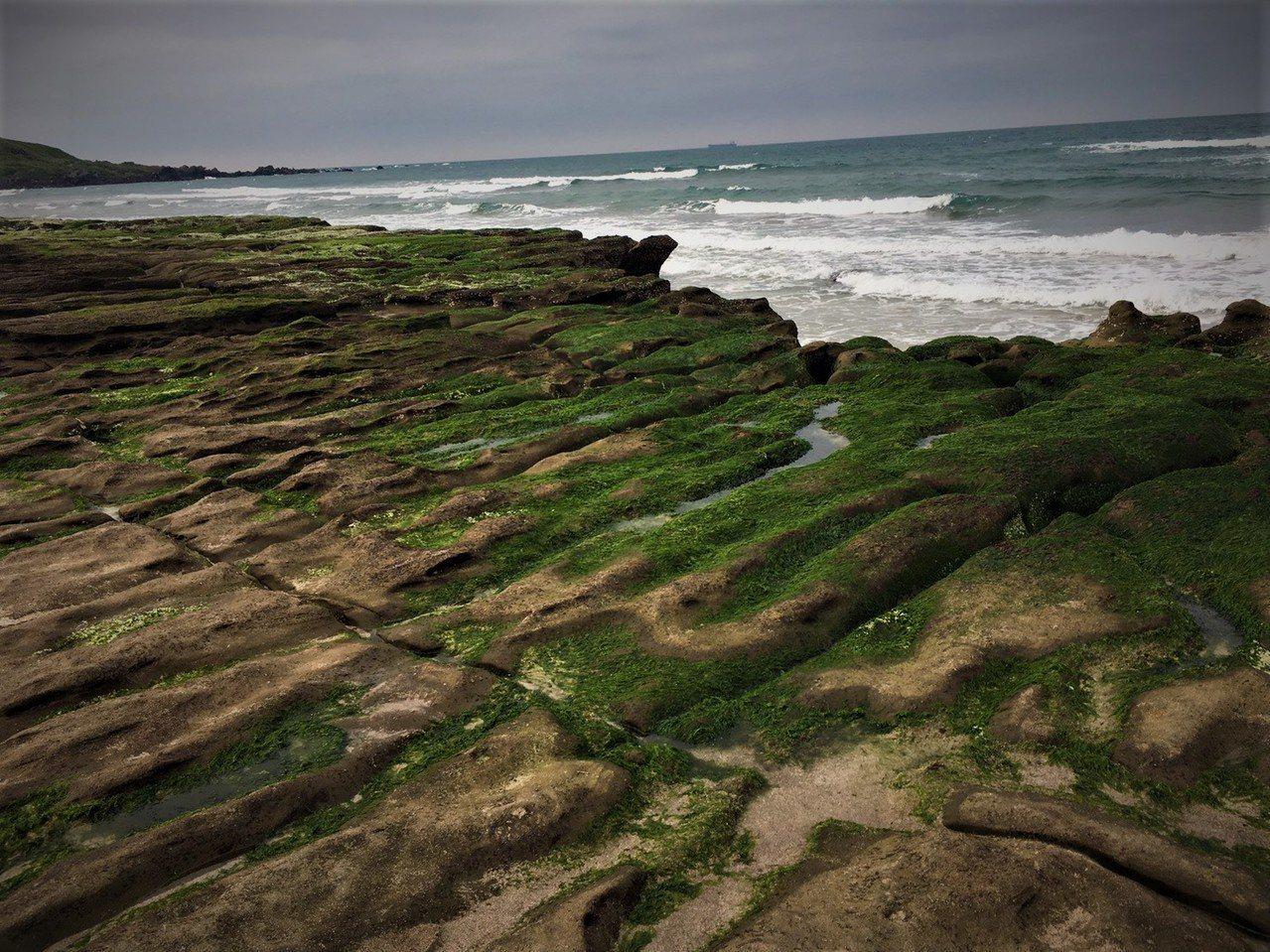 石門老梅綠石槽最近「綠」了,但要看到大片綠油油要再等等,可能要到下個月。圖/北觀...