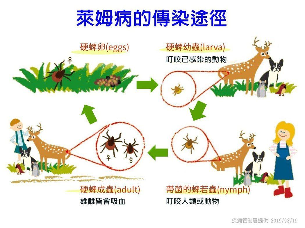 萊姆病是一種人畜共通傳染病,藉由被感染的蜱(俗稱壁蝨)叮咬而傳播。圖為萊姆病傳染...