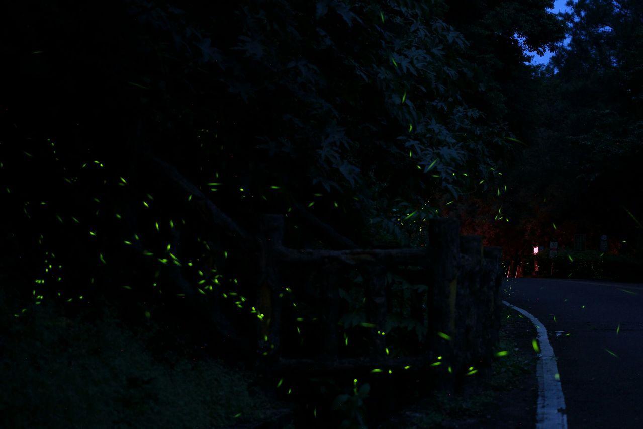 奧萬大自然教育中心結合螢火蟲資源和部落文化推出「自然原味小旅行-螢光織色」活動。...