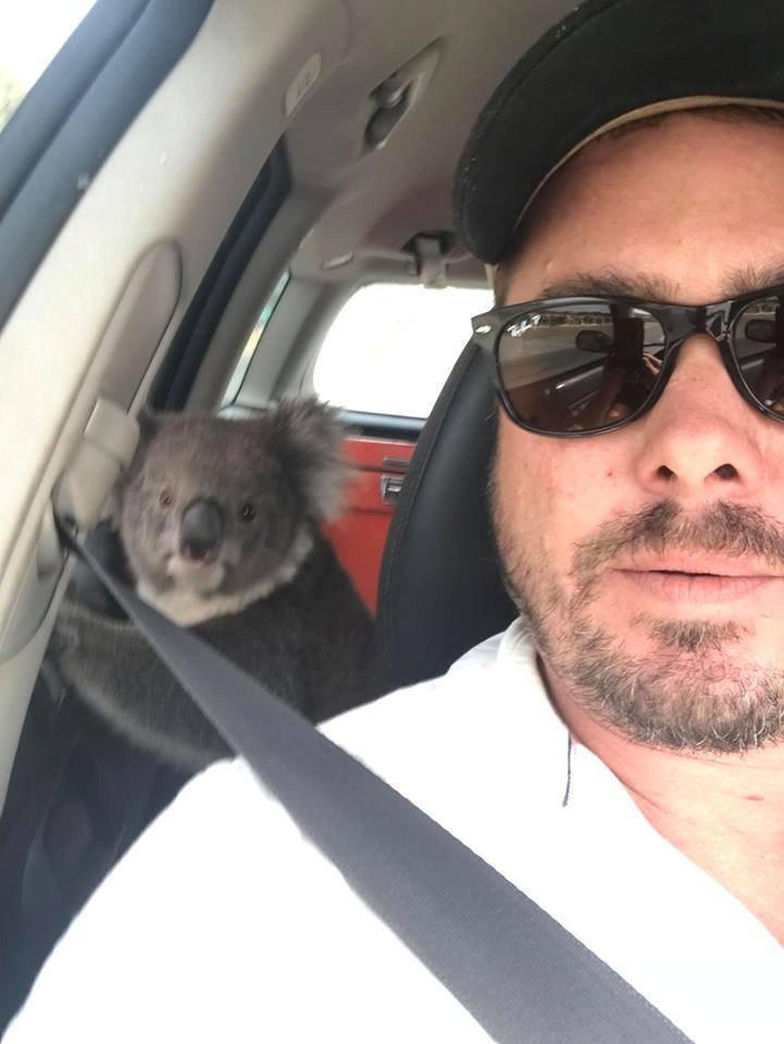 澳洲南部一名釀酒人回到車中時發現車上多了一隻無尾熊,由於澳洲當地天氣相當炎熱,車...