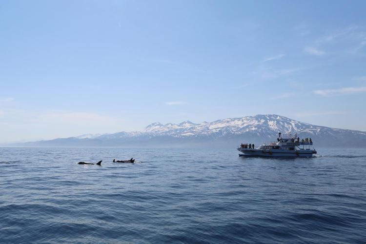 旅客到羅臼町,可安排搭乘賞鯨船出遊賞鯨。圖/北海道中標津空港利用促進期成会提供