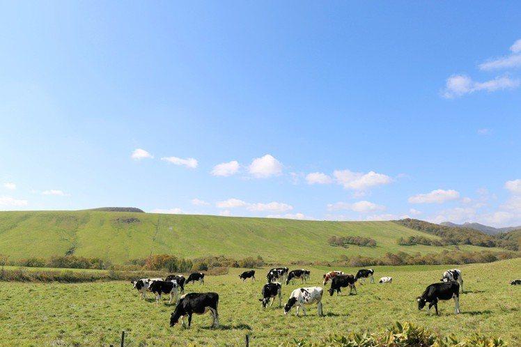 別海町的生乳產量是全日本第一。圖/北海道中標津空港利用促進期成会提供