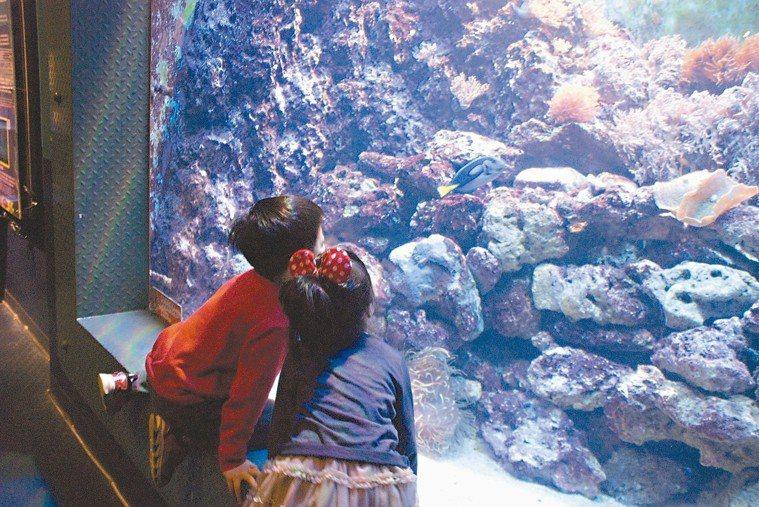 遠雄海洋公園探險島水族館的海洋生物吸引孩童。 圖/遠雄海洋公園提供