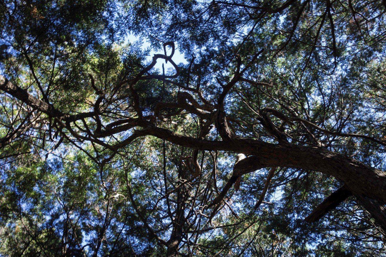 圖為日本自殺森林。 法新社