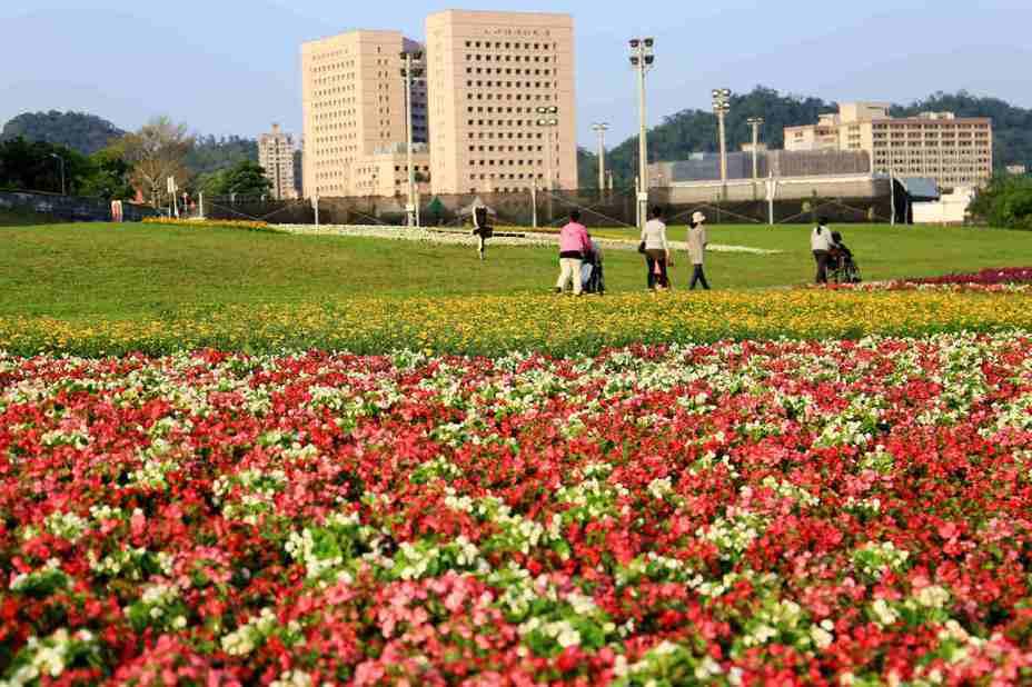 道南河濱公園的花海現在適逢盛開時期。圖/擷取自臺北市政府工務局水利工程處官網