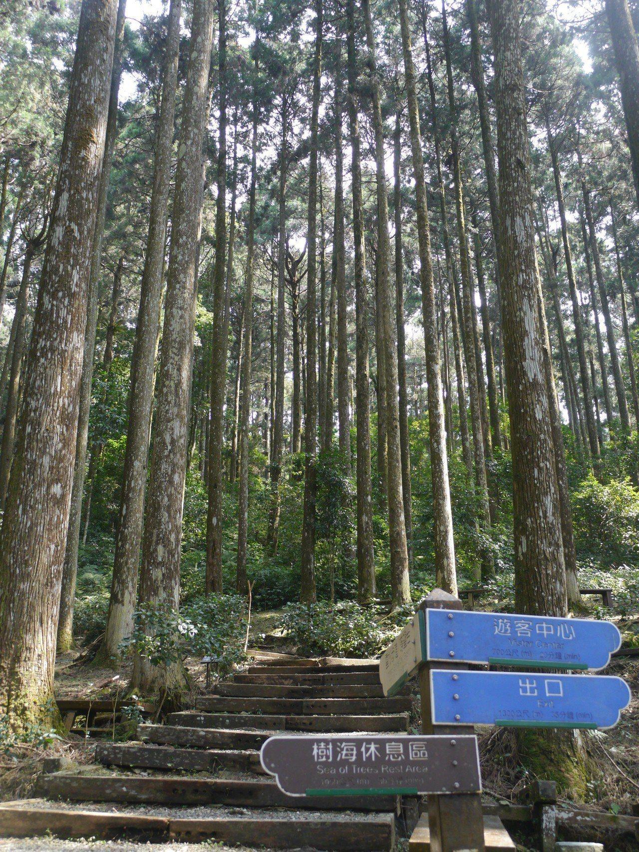 園區步道與人造林景觀。記者徐白櫻/攝影