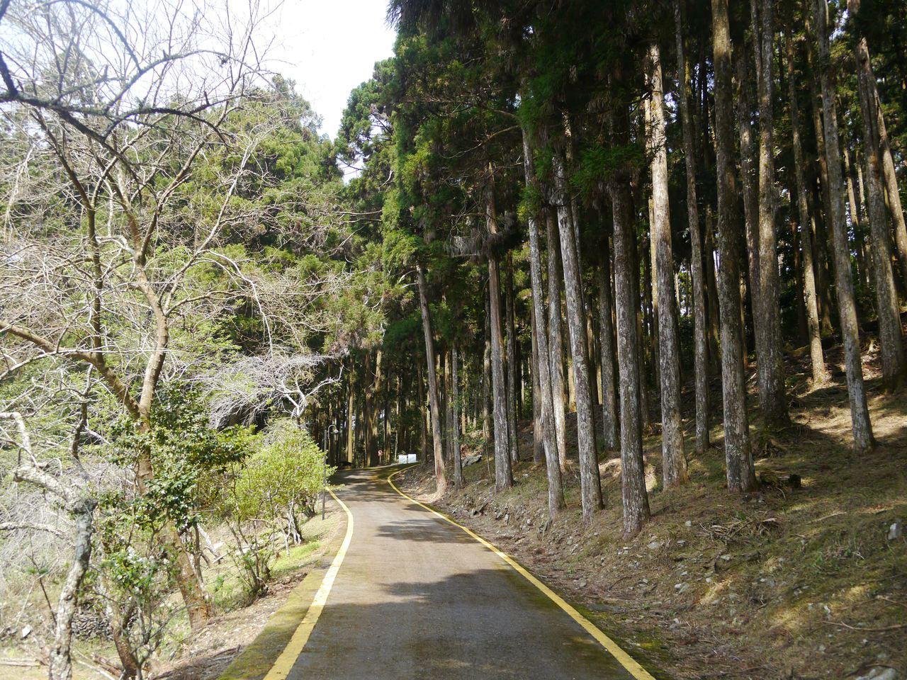 藤枝森林遊樂園區面積廣達770公頃。記者徐白櫻/攝影