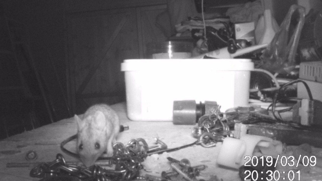 72歲的英國退休電工麥凱爾斯2月發現,用來放養鳥用碎花生的舊冰淇淋桶有著一根螺絲...