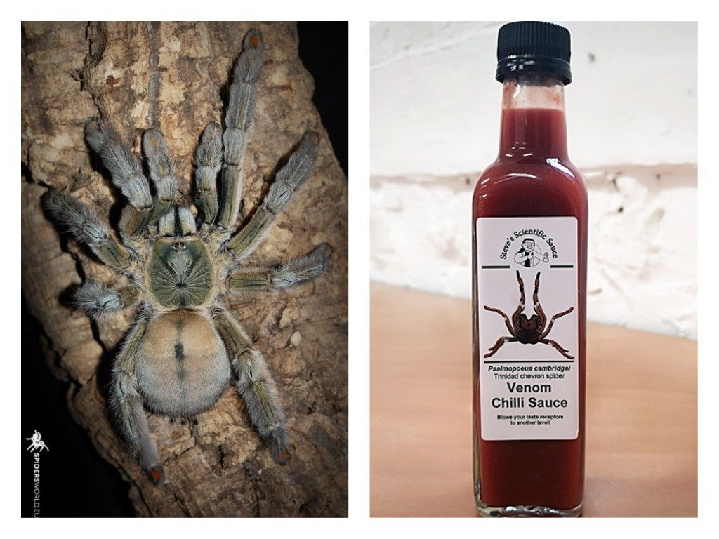 英國科學家崔姆宣稱他帶領的研究團隊找到方法,將安全萃取出來的蜘蛛猛毒調製成辣醬,...