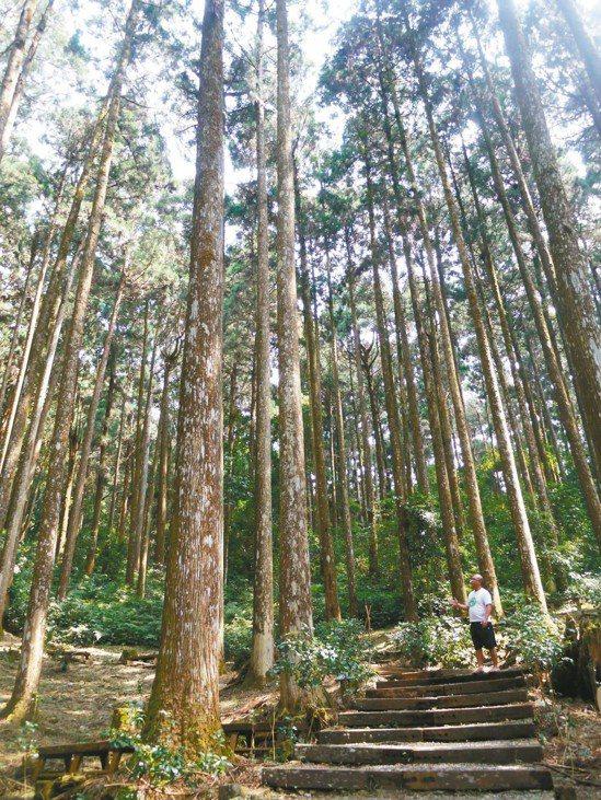 藤枝森林遊樂區海拔1550公尺,林下步道涼爽宜人。 記者徐白櫻/攝影