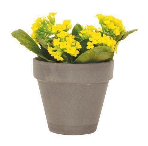 長壽花:可能導致嘔吐或腹瀉,甚至引起心律不整。圖/摘自《今天起,植物住我家》