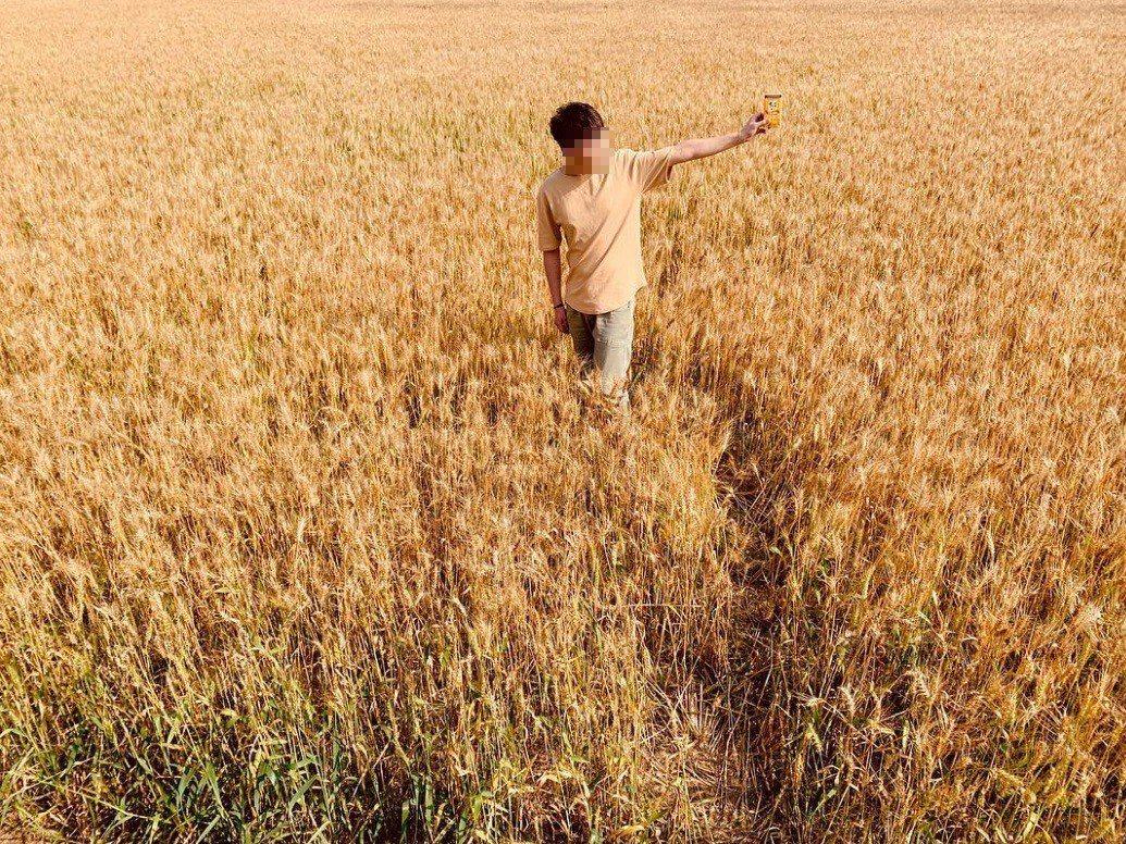 雖然麥田旁都有告示牌要求民眾不要踩進小麥田,可有許多人為了拍照還是踩入麥田。圖擷...