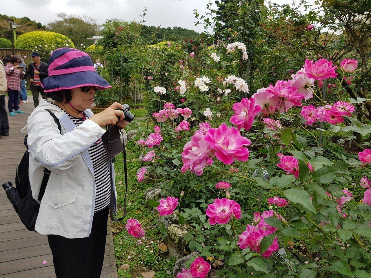 北市新生公園「台北玫瑰園」玫瑰展今天正式開幕,將展至4月8日,玫瑰園品種區玫瑰已...