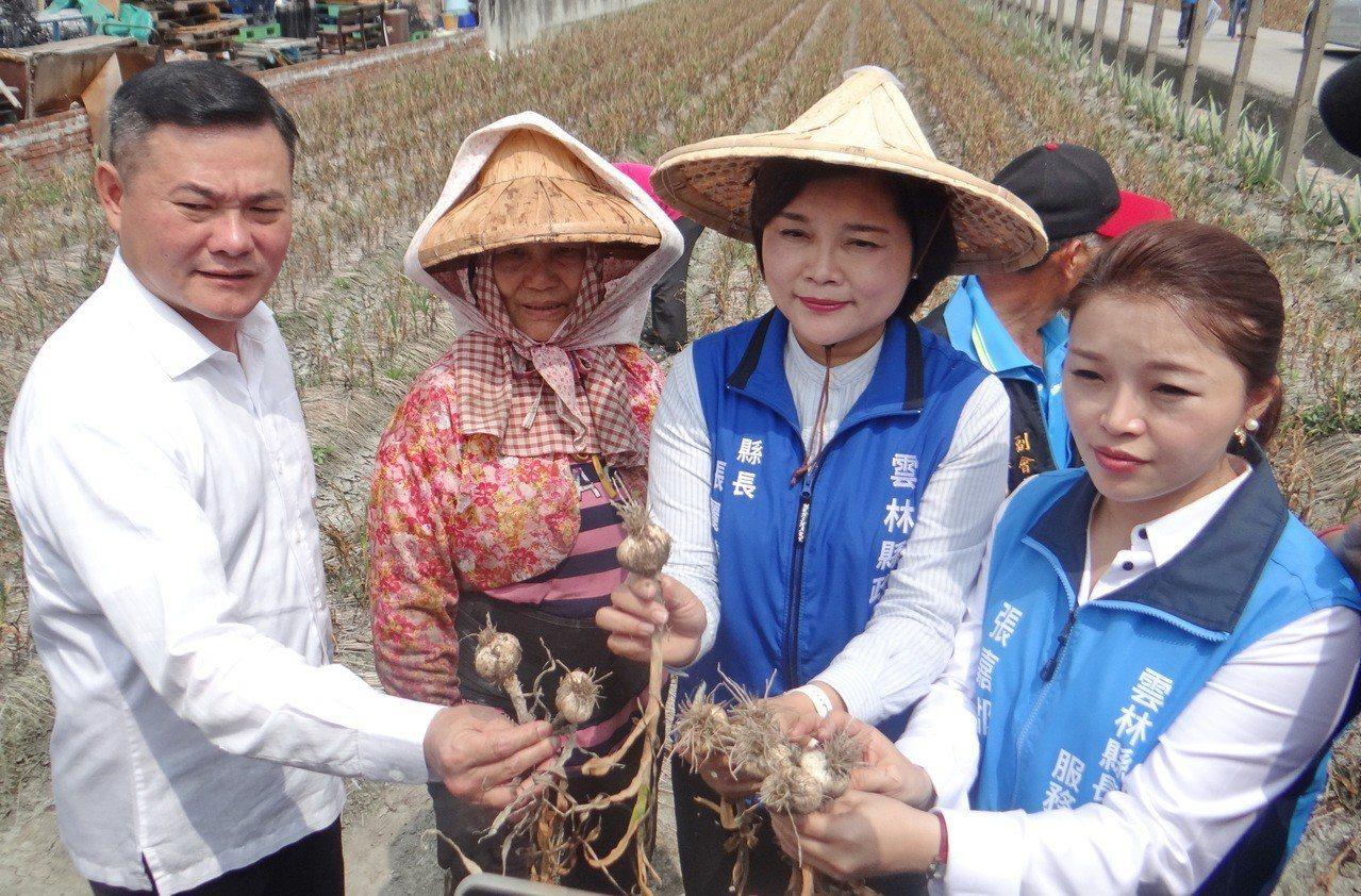 暖冬對蒜頭帶來嚴重衝擊,農民深感無奈並要求政府不要進口。記者蔡維斌/攝影