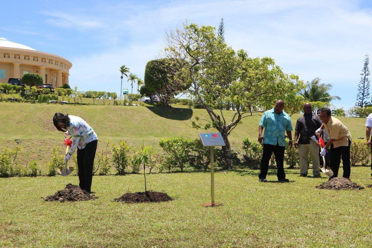 蔡英文總統隨與帛琉總統雷蒙傑索進行植樹儀式。記者周佑政/攝影