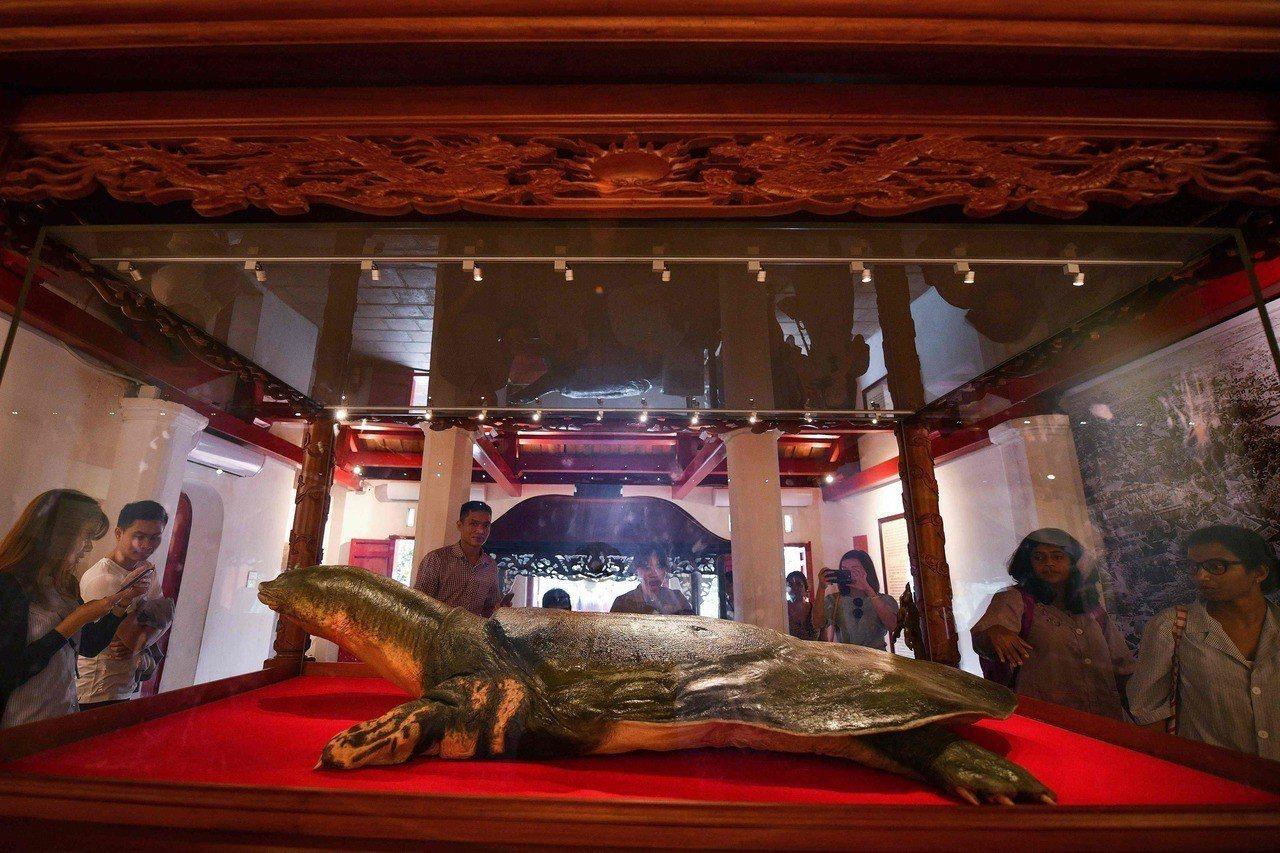 象徵國家獨立的越南「護國神鱉」被製成標本供人瞻仰。在共產國家中,僅有列寧、毛澤東...