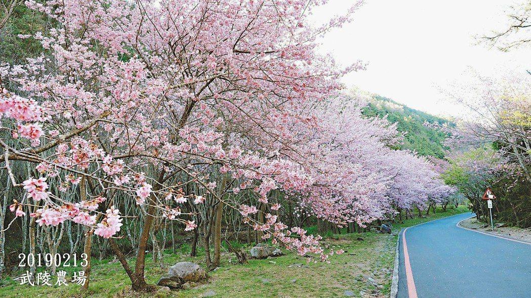 春日裡最浪漫的事,莫過於繁花樹下賞美景。春日裡最讓我神往的地方,就是千山萬水之外...