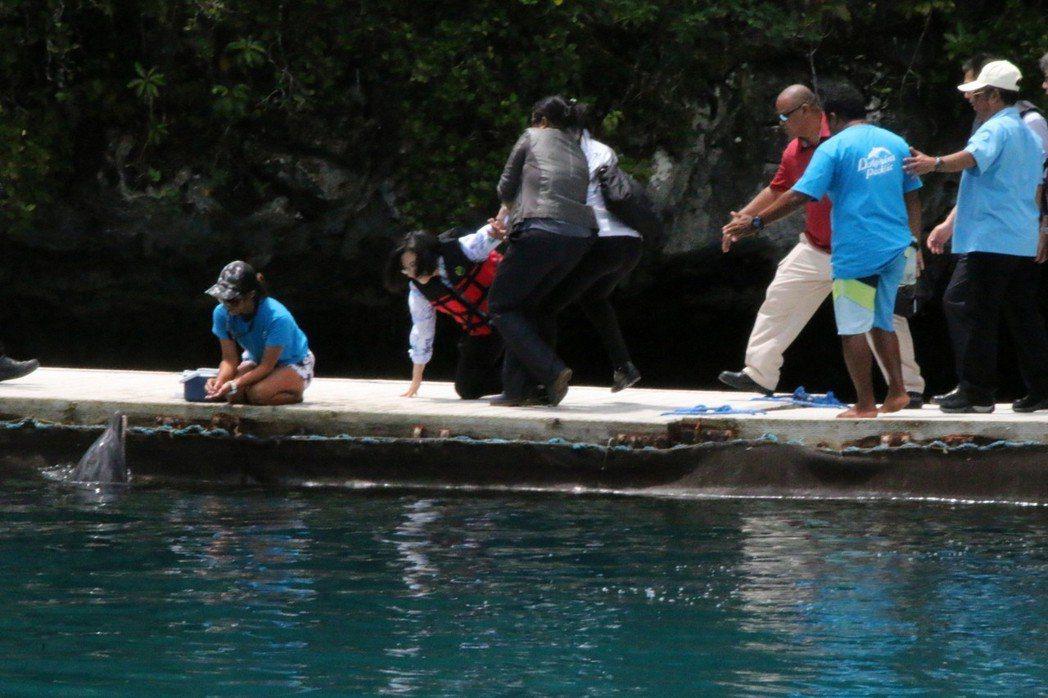 總統蔡英文(左二)出訪友邦帛琉,廿三日在海豚灣參觀海豚時不慎絆倒,隨行人員趕忙攙...