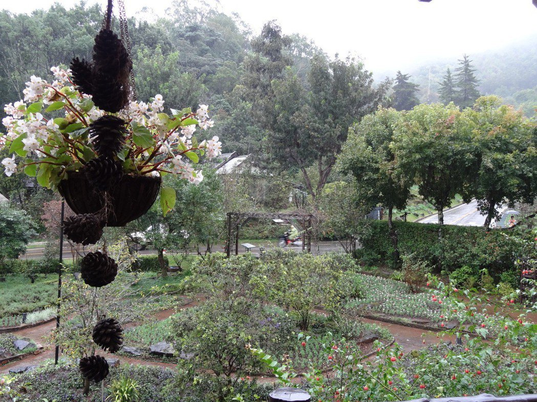 泰北金三角轉型發展觀光,圖為一處農場遍布玫瑰花,成為響譽國際的觀光勝地。 圖/聯...