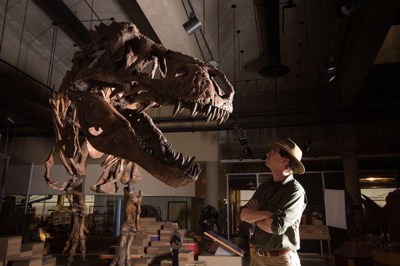 暴龍「史寇提」(Scotty)身長13公尺,體重很可能超過8800公斤。 法新社