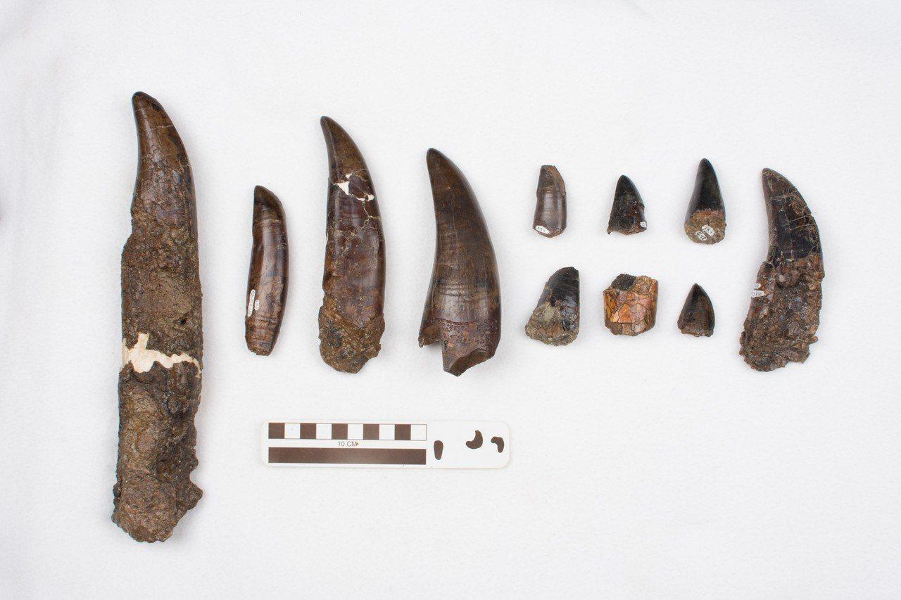 古生物花了數十年重建骨骼後,確認1991年在加拿大西部所發現的暴龍化石是全球迄今...