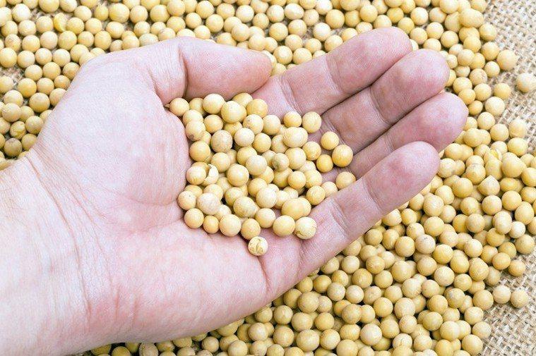 黃豆優格的口感,與豆子和菌種密切相關。 圖/123RF