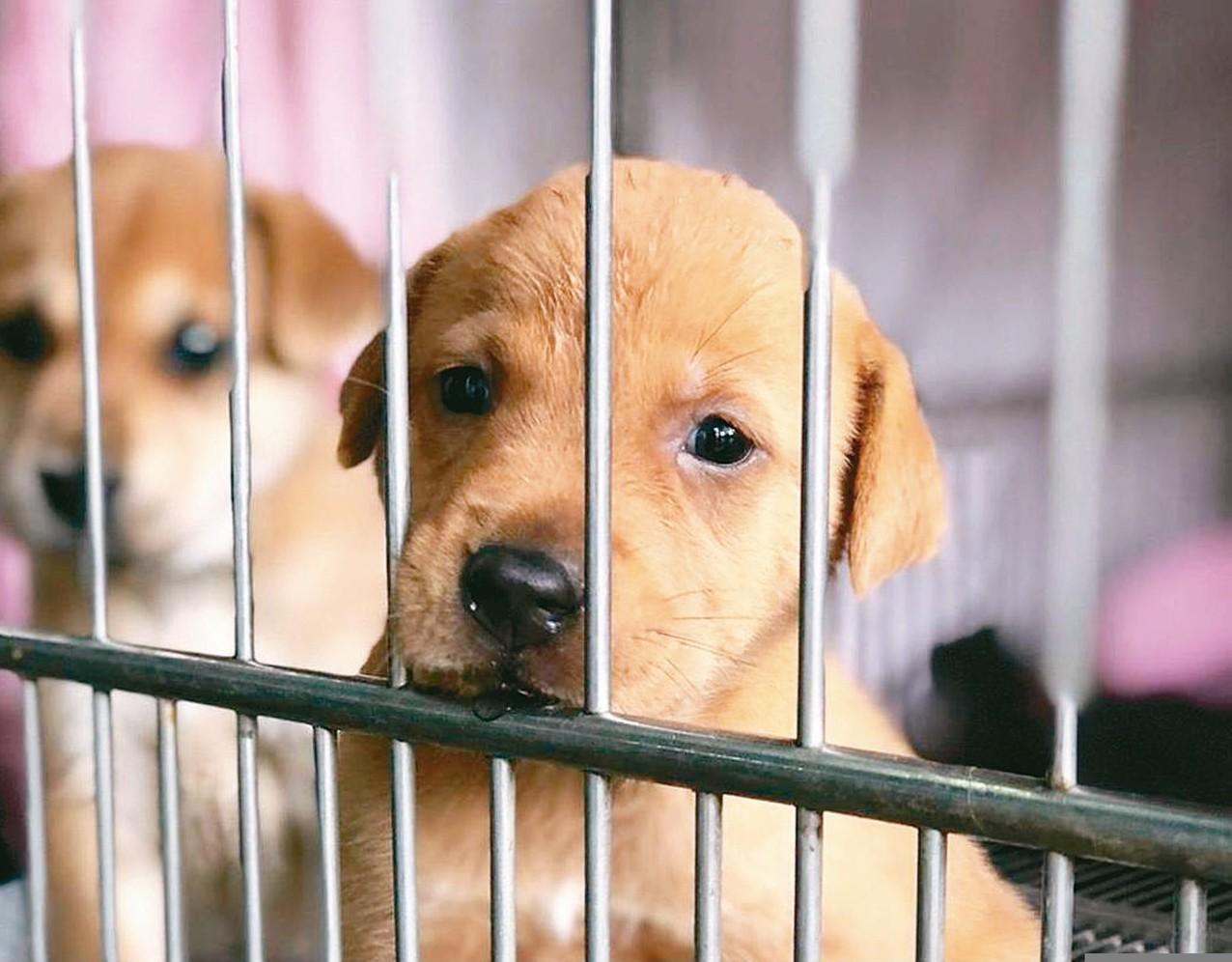 藥品追蹤流向規定,讓獸醫界憂心600多項人用藥品將不能再用於動物。 圖/聯合報系...