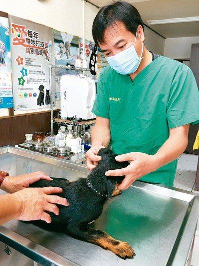 藥事法規定,獸醫診療機構並非藥品銷售通路。 圖/聯合報系資料照片