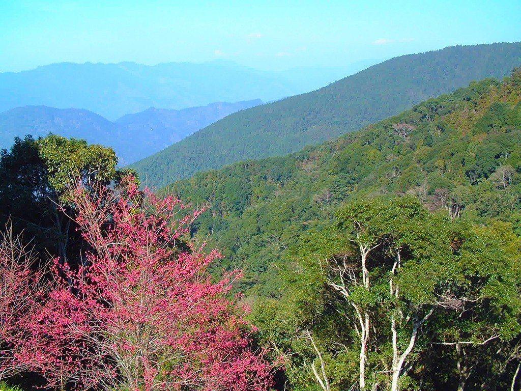 藤枝國家森林遊樂園將在3月底重新對外開放。圖/摘自台灣森林悠遊網