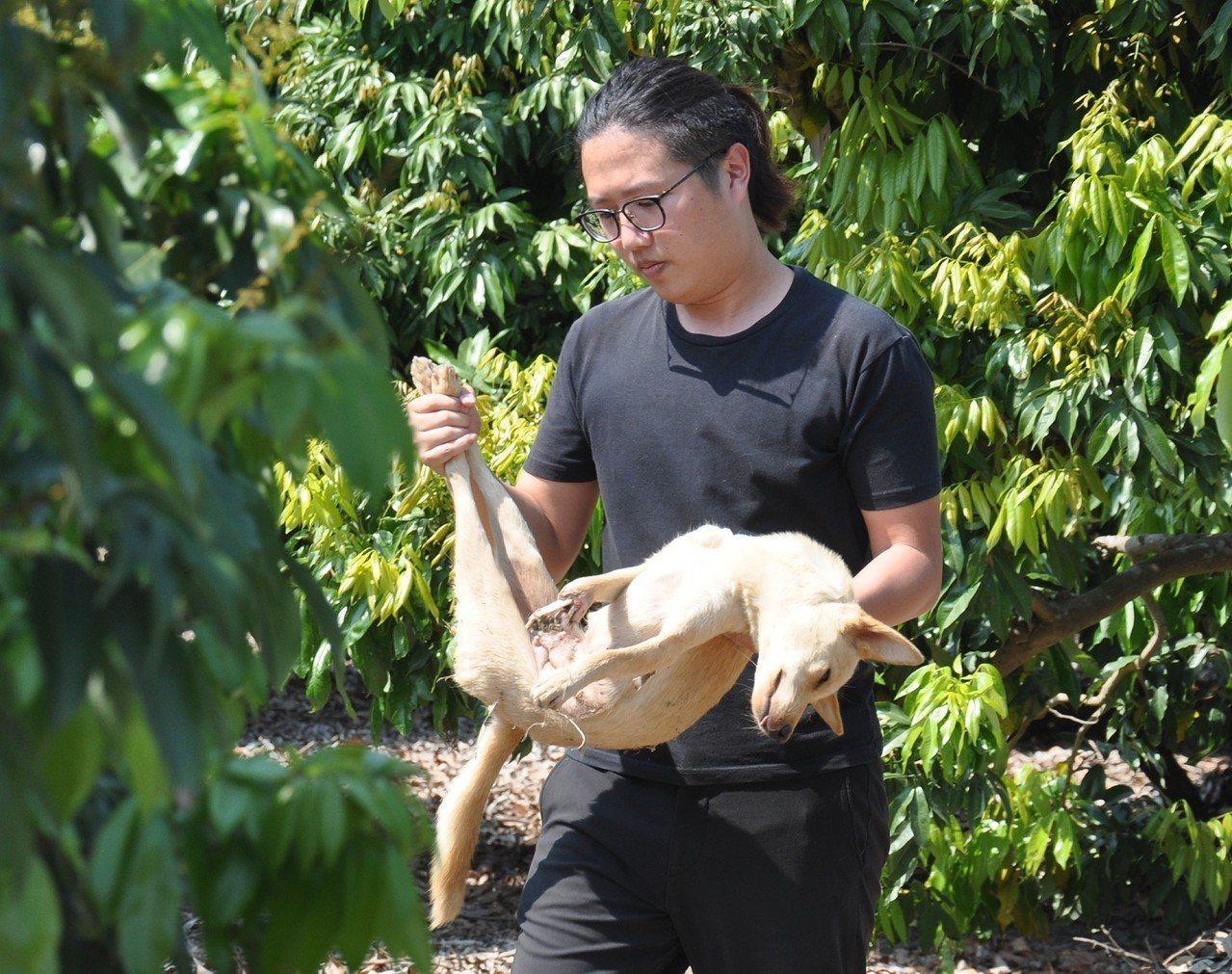 台灣動物緊急救援小組是近日接獲民眾通報,在高雄大樹興田里一代,最近出現一隻前腳露...