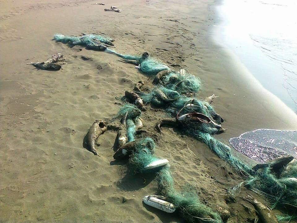 漁民亂丟的魚網還纏繞著死魚,還被PO在網路上。圖╱取自台灣釣權團結聯盟社群
