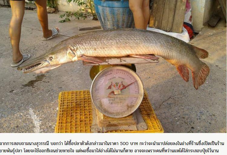 泰國市場近日出現一隻長達1公尺,樣貌「半鱷半魚」的古老魚類,據悉已存活地球達1億...