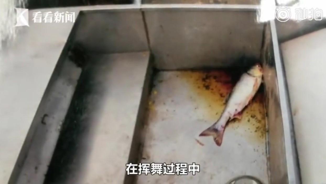 男子欲用電流將池塘內的魚電昏,卻不慎將一旁的友人電死。圖片來源/看看新聞