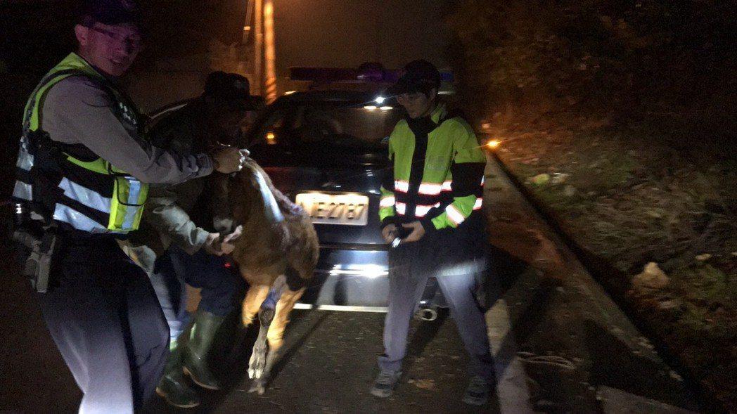警方派兩輛車捕羊。記者鄭國樑/翻攝