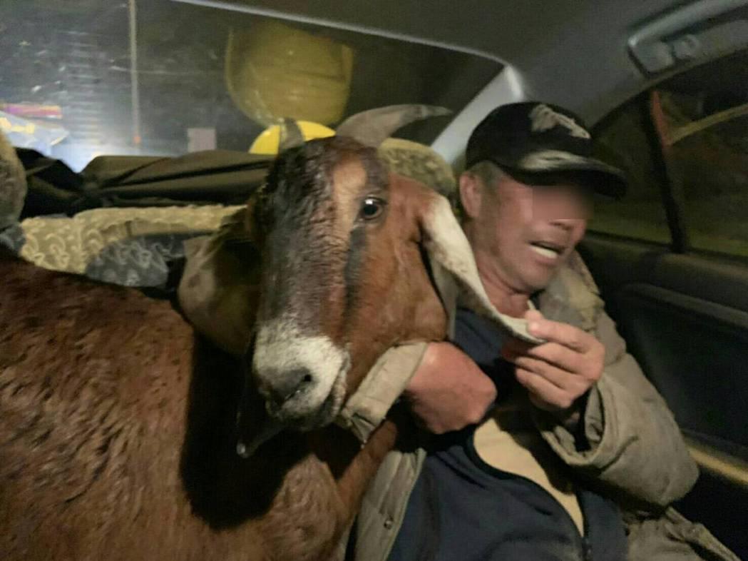 葉姓飼把羊扛上肩坐警車回牧場。記者鄭國樑/翻攝