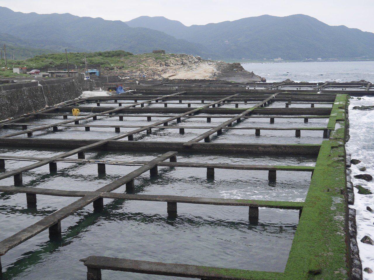 貢寮鮑用海水天然養殖。記者吳淑君/攝影