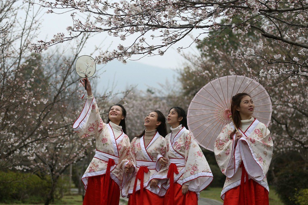 穿漢服賞櫻在大陸年輕人間相當流行。圖為身著漢服的姑娘在南京明孝陵櫻花園內賞櫻。 ...