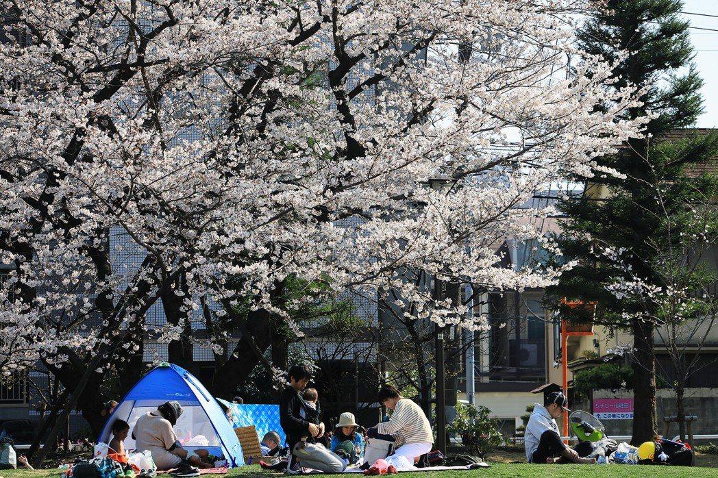 漫步在櫻吹雪的街道上,體驗日本人的賞櫻生活。圖為東京品川的中央公園賞櫻。 攝影/...