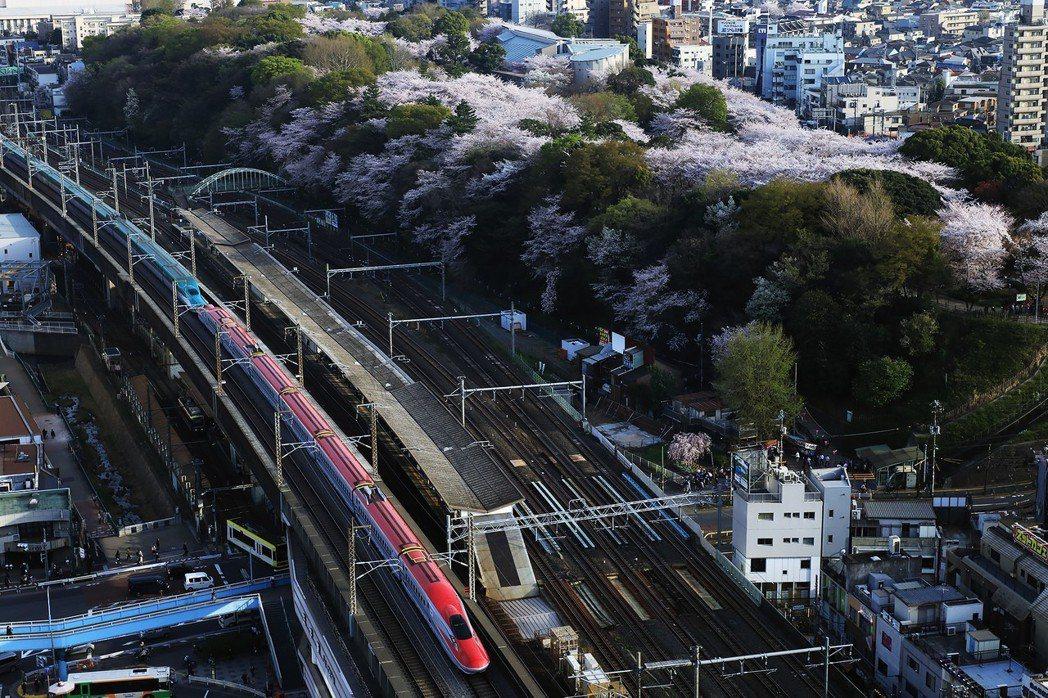 為了解決日本列島的櫻花危機,部分地方政府開始展開對策。圖為東京飛鳥山與東北新幹線...