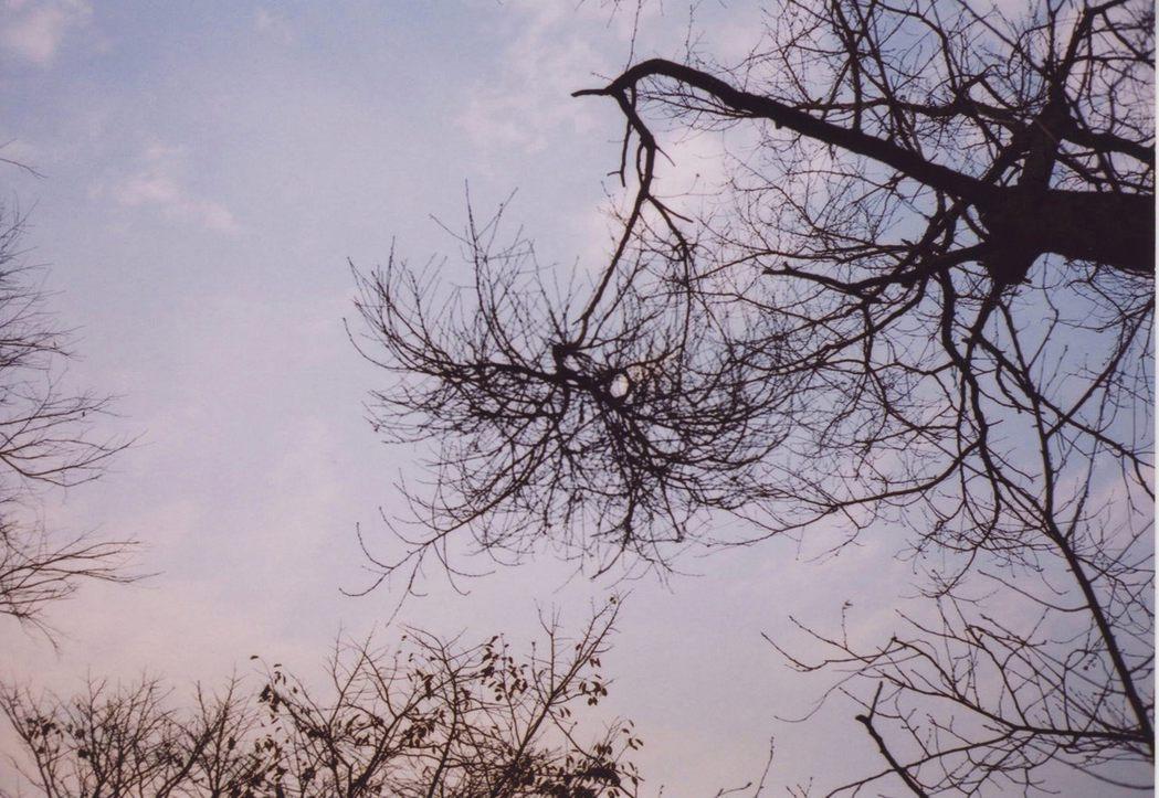 天狗巢病會導致枝條節尖變短,發芽處過度分枝與徒長,樹葉過度增生但卻縮小且軟弱。 ...