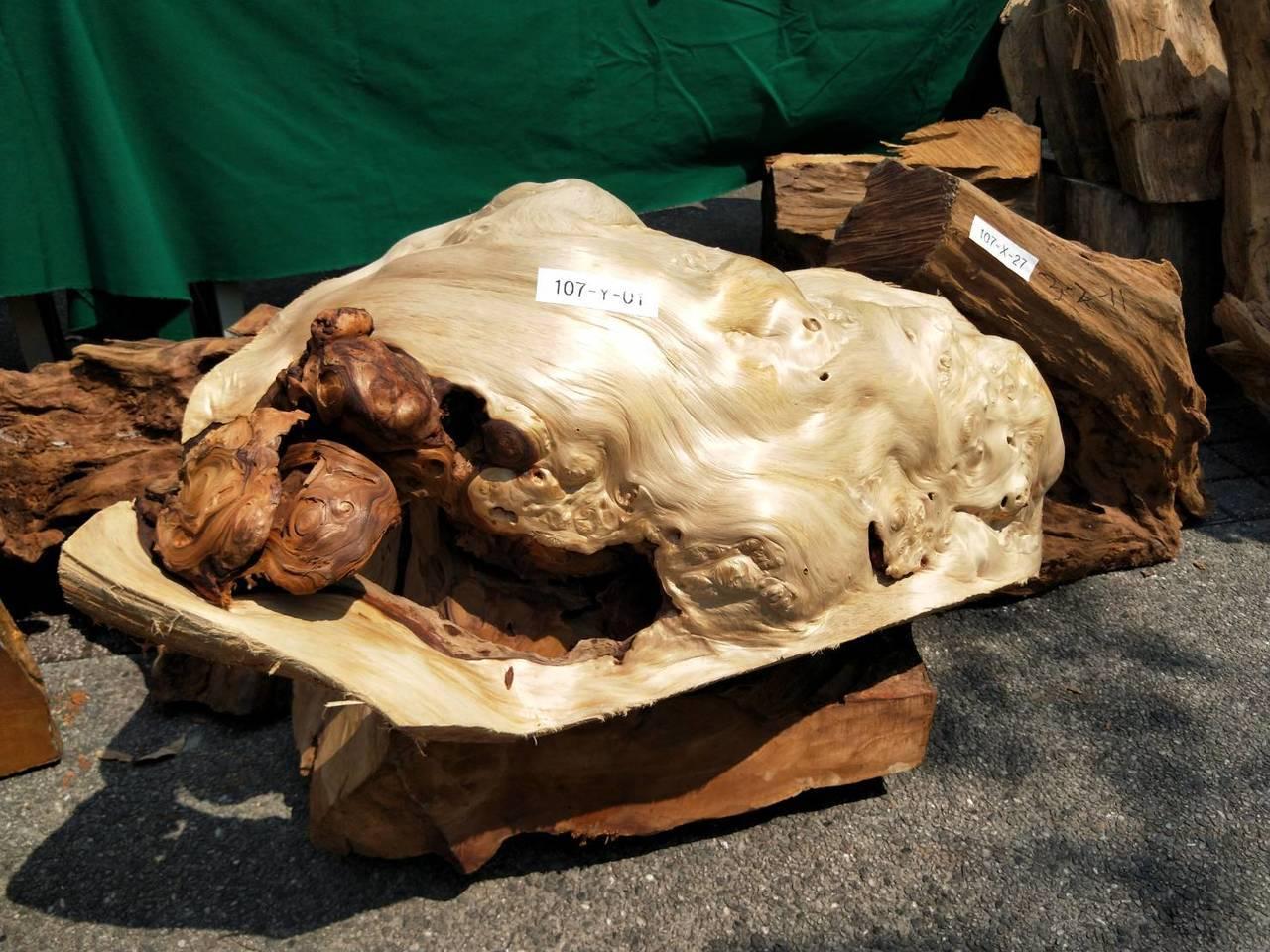 檜木樹瘤。記者江婉儀/攝影