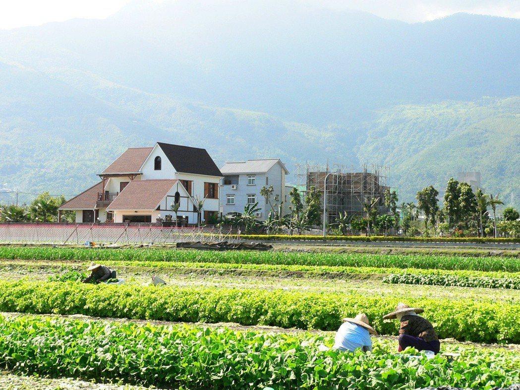 花蓮縣吉安鄉的農舍如雨後春筍冒出,改變了原有鄉村面貌。 記者劉明岩/攝影