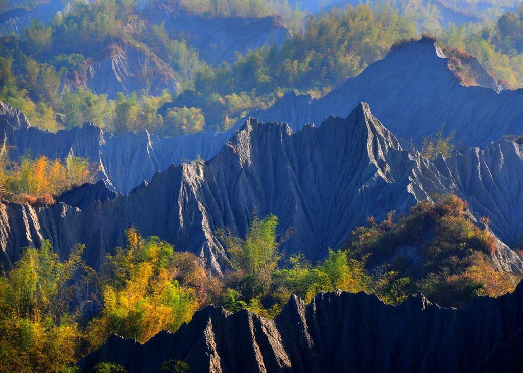 圖/翠綠刺竹景。截自台南旅遊網。
