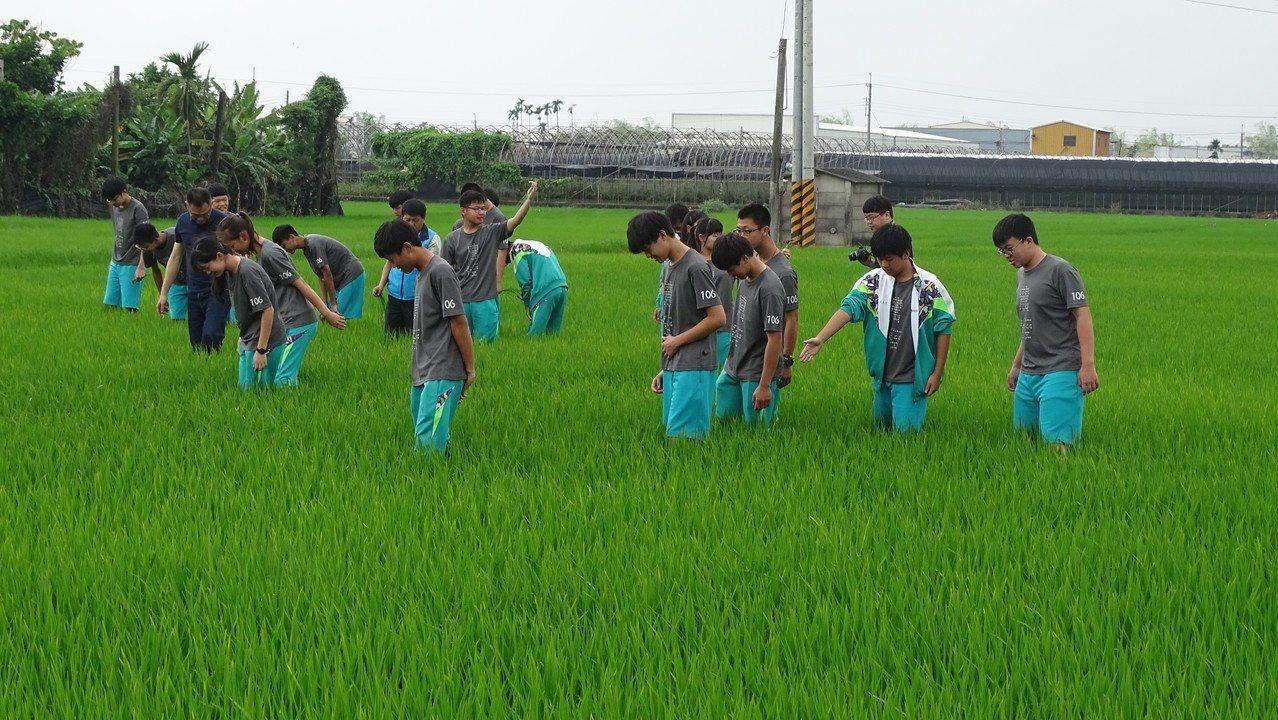 員農學生走出教室,來到八堡好米農場走下稻田彎腰拔草。記者何烱榮/攝影