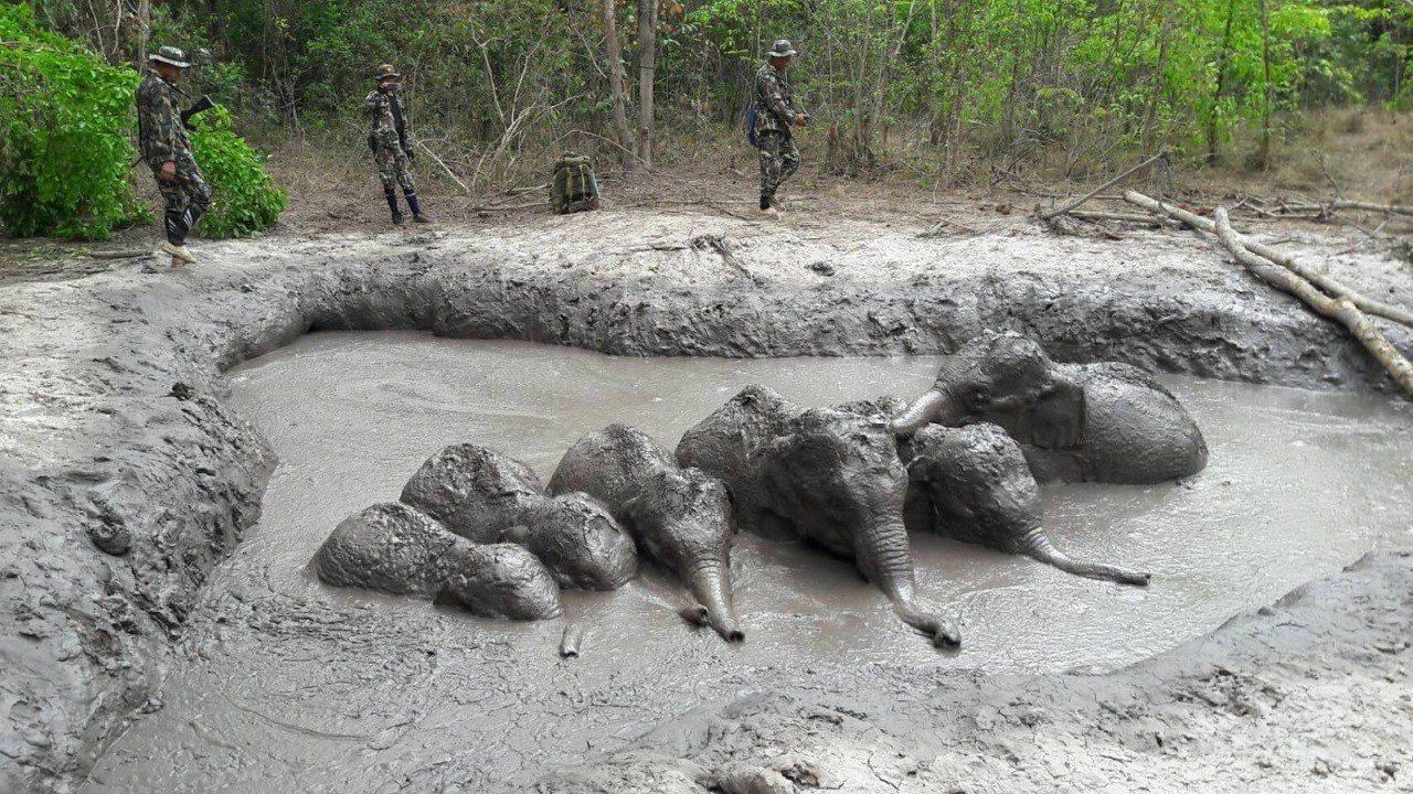 泰國國家公園暨野生動植物保護部提供他蘭國家公園巡護員28日協助幼象群從泥坑脫身的...