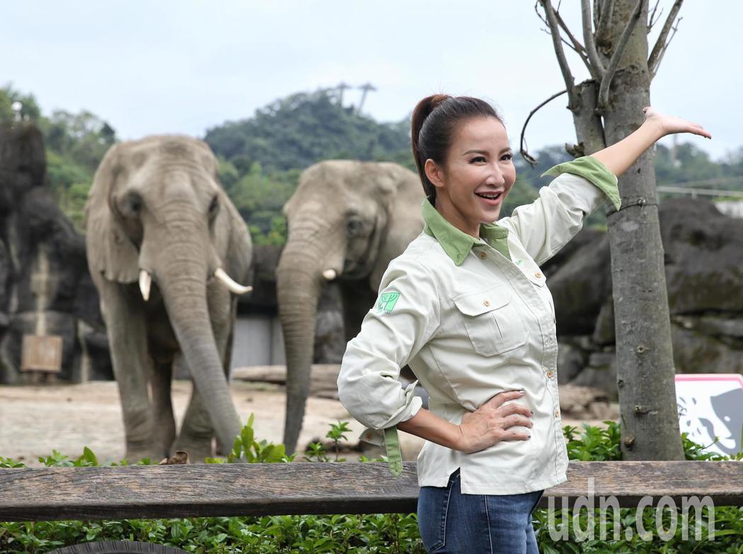 CoCo李玟擔任一日動物保育員體驗照顧大象生活。記者鄭清元/攝影